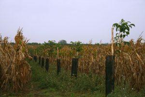 agroforesterie-loir-et-cher-c-richard-bd